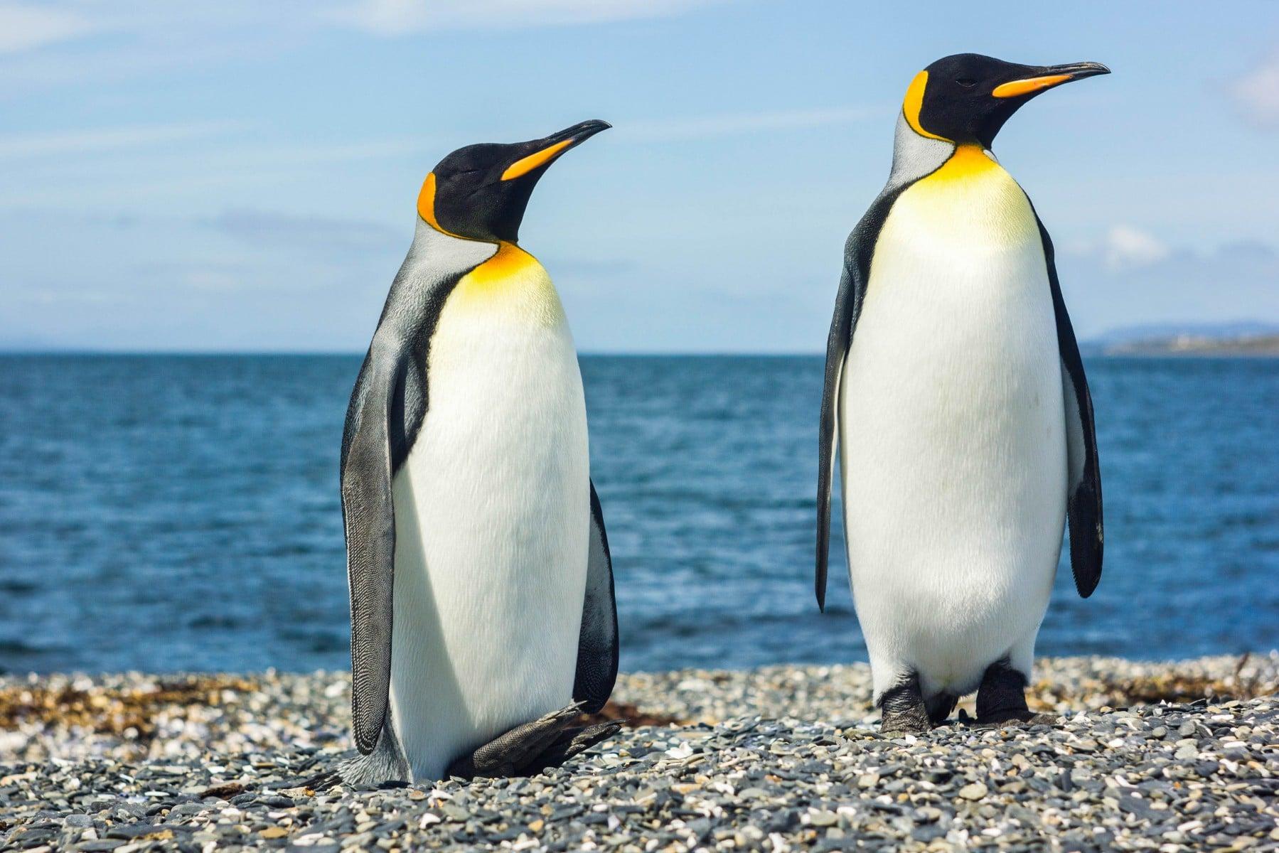 Van pinguïn tot Hawaï